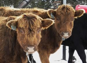 Delanie & Willo 1st Place Herd shots